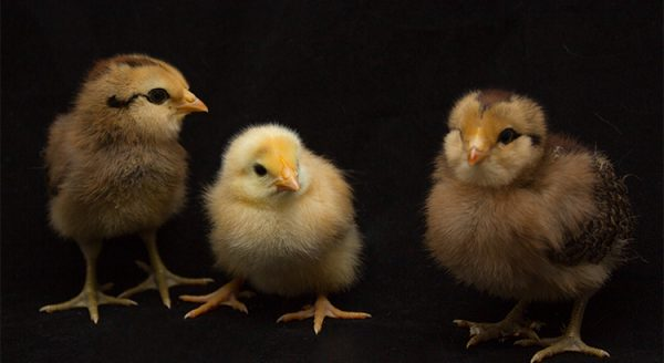 Why All the Chicken Littles Should Calm Down | MyKCM